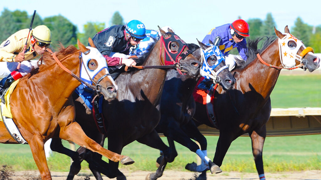 quarter horse racing