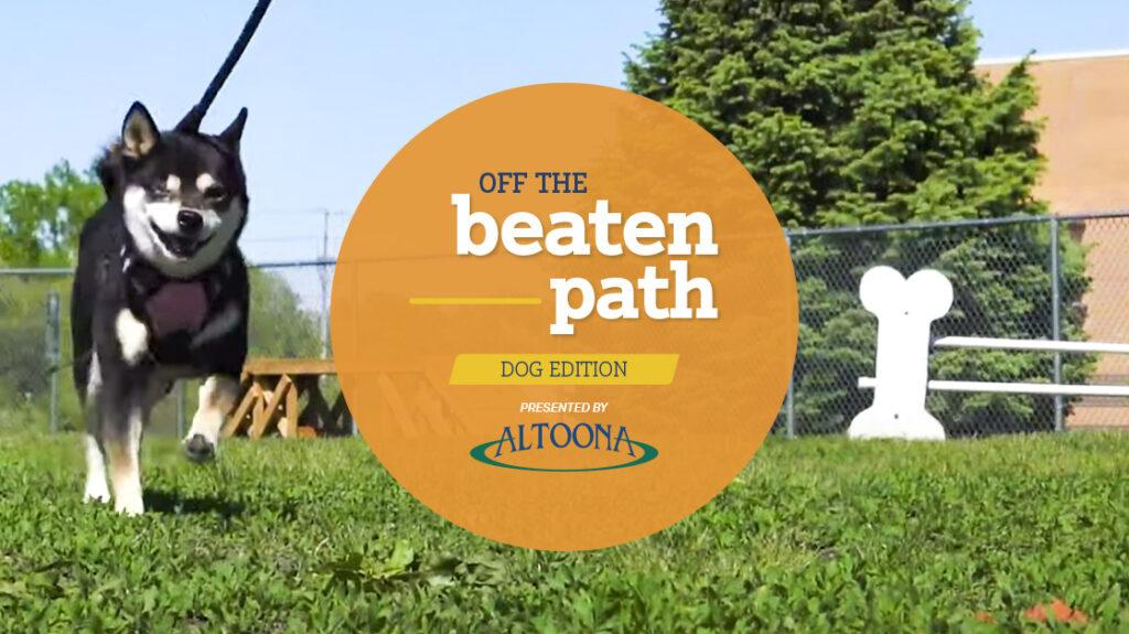 off the beaten path dog edition